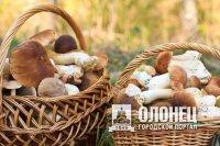 Фестиваль «Белый гриб» состоится 17 сентября в Лодейном Поле