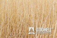 В Лодейнопольском районе 14 га территории возвращены в сельхозоборот