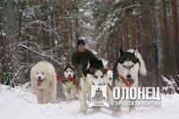 21 января на на международные гонки в собачьих упряжках приедет Федор Конюхов