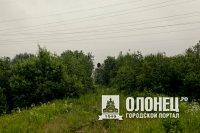 Лесоарендаторы, которые задолжали 12 млн рублей, ответят перед законом