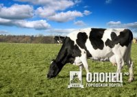 В Сортавале построят молочую ферму