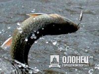Рыбный фестиваль собрал 70 участников