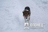 Выставка собак прошла в Подпорожье