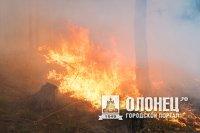 Жаркая погода в Карелии может стать причиной сильных пожаров